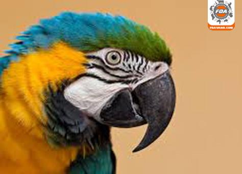 محصولات پرندگان زینتی